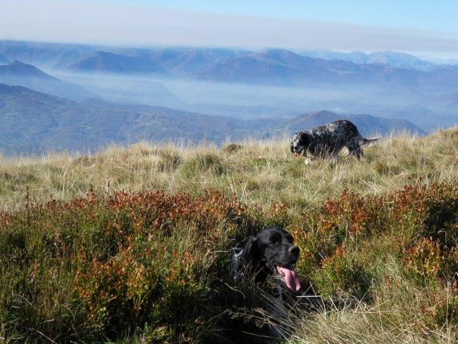 Carmil, vue sur les Pyrénées