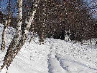 Chemin enneigé