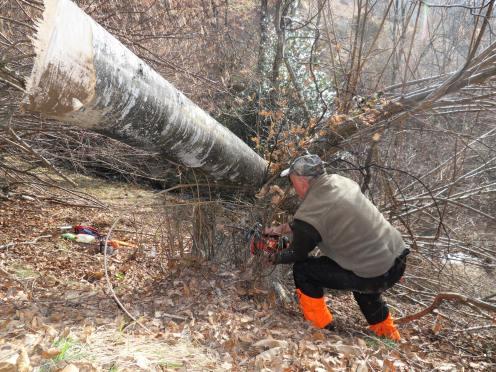 Un arbre abattu