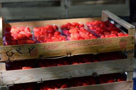 Cagettes de fraises sur le marché
