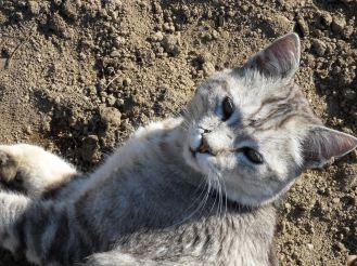 Le chat surveille le jardin