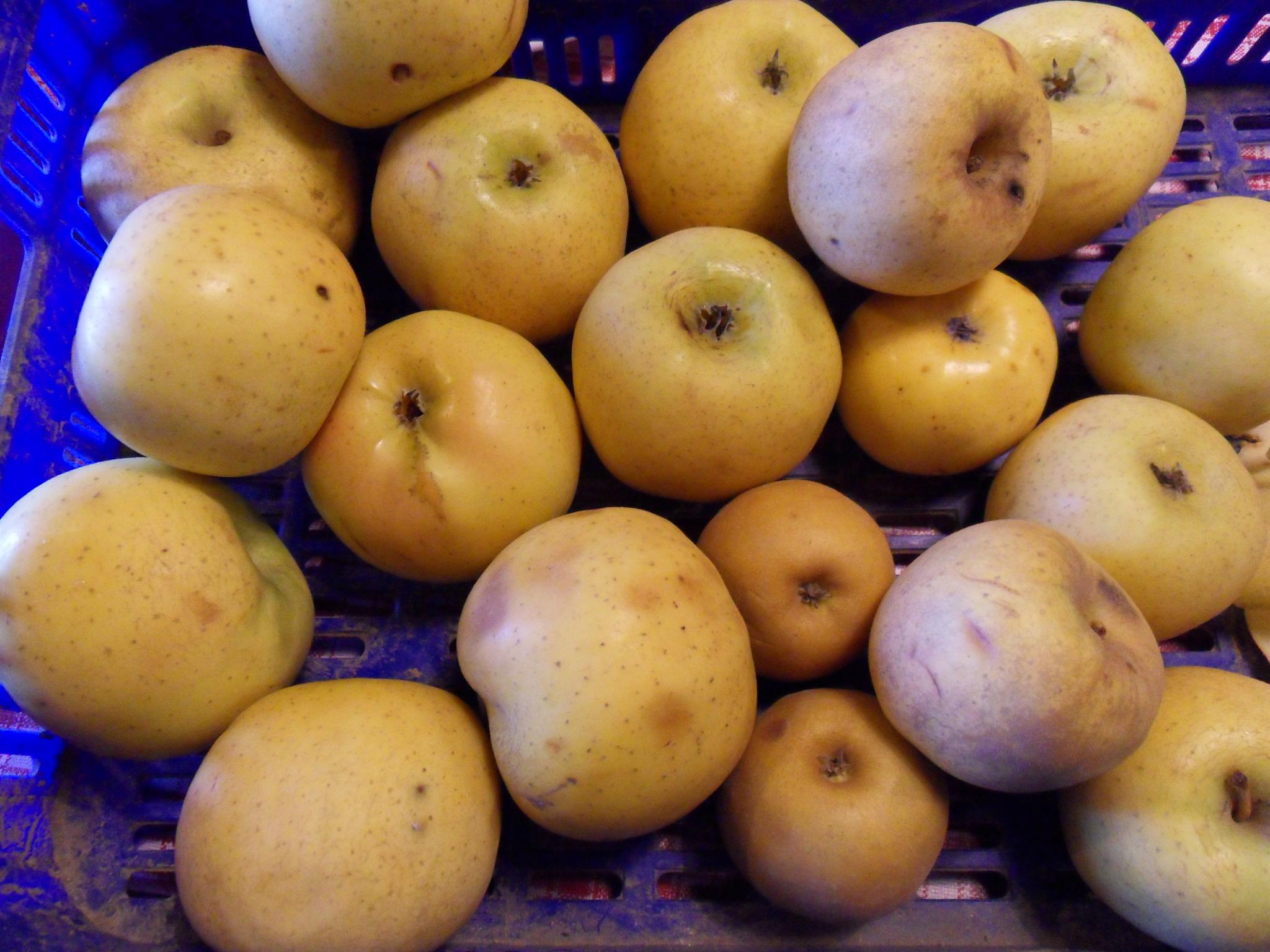 Un des desserts du Péré : la compotée de pommes