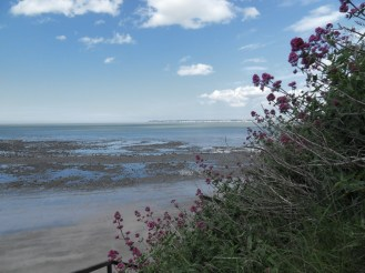 Fleurs en bord de mer