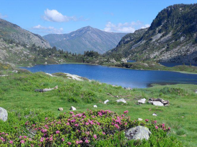 Rhodendrons et étang de montagne