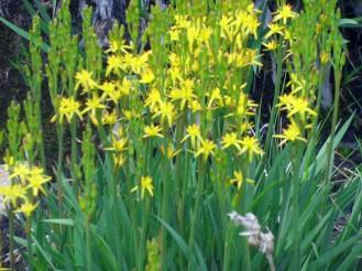 De jolies fleurs partout
