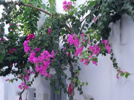 ruelle fleurie
